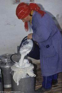 kazakhstan_elevage_lait_chamelle_femme_traite