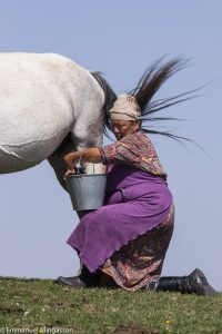 kirghizstan_jument_lait_traite_koumis