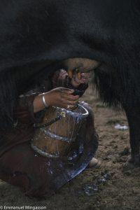 mongolie_lait_dri_traite