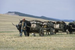 mongolie_transhumance_yack