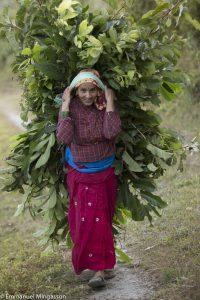 nepal_femme_fourrage