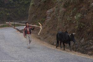 nepal_paysan_houe_vache
