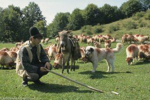 Roumanie, le berger, son chien et son troupeau