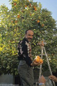 syrie_palmyre_oranger