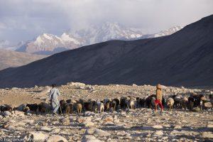 tadjikistan_pamir_montagne_troupeau