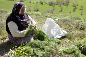 turquie_kurdistan_van_herbes