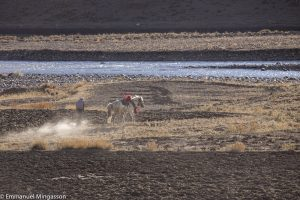 tibet_cheval_labour