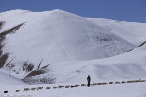tibet_troupeau_berger_neige