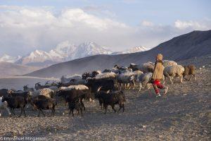tadjikistan_pamir_troupeau