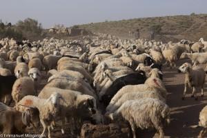 Iran, troupeau à l'abreuvoir dans le désert de Gonabad